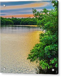 Acrylic Print featuring the photograph Sunlight On The Marsh by Steven Ainsworth