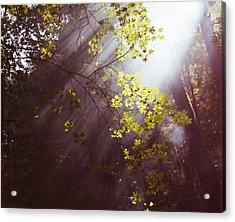 Acrylic Print featuring the photograph Sunlit Beauty by Lora Lee Chapman