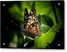 Sunlit Butterfly Acrylic Print by Karen Scovill