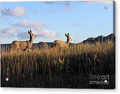Sunlit Deer  Acrylic Print