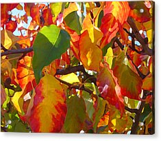 Sunlit Fall Leaves Acrylic Print by Amy Vangsgard