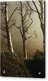 Sunlit Morning Acrylic Print