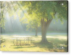 Sunlit Morning Acrylic Print by Tamyra Ayles