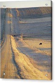 Sunlit Road Acrylic Print