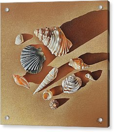 Acrylic Print featuring the drawing Sunlit Shells by Elena Kolotusha
