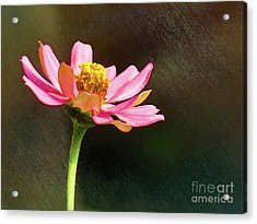 Sunlit Uplifting Beauty Acrylic Print