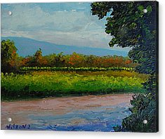 Acrylic Print featuring the painting Sunlit Vinyard by Fred Wilson