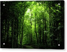 Acrylic Print featuring the photograph Sunlit Woodland Path by Lars Lentz