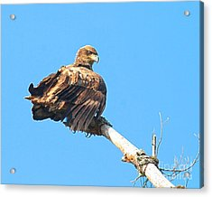 Acrylic Print featuring the photograph Sunning Out On A Limb by Debbie Stahre