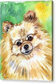 Sunny - Pomeranian Acrylic Print