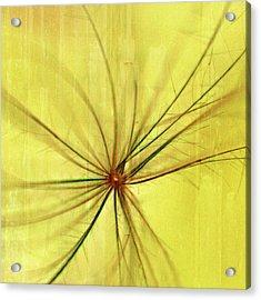 Sunny Acrylic Print by Bonnie Bruno