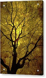 Acrylic Print featuring the painting Sunny Branches by Gray  Artus