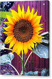 Sunny Day Acrylic Print by MaryLee Parker