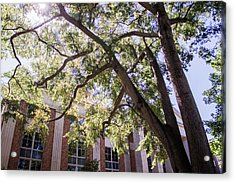 Acrylic Print featuring the photograph Sunny Days At Uga by Parker Cunningham