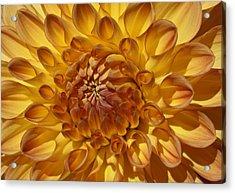 Sunny Delight Acrylic Print by Monnie Ryan