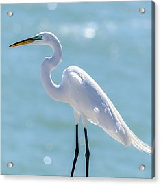 Acrylic Print featuring the photograph Sunny Egret by Steven Sparks