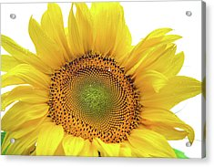 Acrylic Print featuring the photograph Sunny Flower 1 by Jenny Rainbow