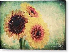 Sunny Gerbera Acrylic Print by Angela Doelling AD DESIGN Photo and PhotoArt