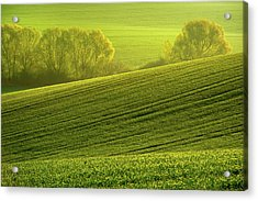 Acrylic Print featuring the photograph Sunny Green by Jenny Rainbow