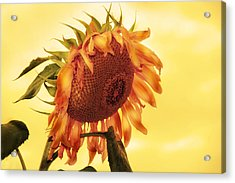 Sunny Acrylic Print by Kathleen Stephens