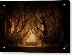Sunny Morning In Dark Hedges Acrylic Print