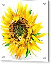 Sunny Acrylic Print by Now