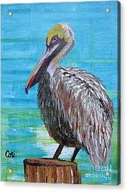 Sunny Pelican Day Acrylic Print