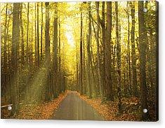 Sunny Roaring Fork Road Acrylic Print by Jonas Wingfield