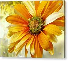 Sunny Side Up Acrylic Print