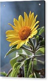 Acrylic Print featuring the photograph Sunny Side Up  by Saija Lehtonen