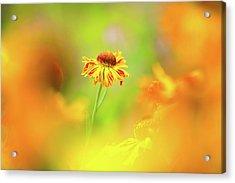 Sunny Spirit Acrylic Print