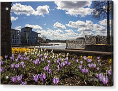 Sunny Spring Flowers In Helsinki Acrylic Print