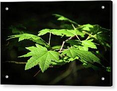 Sunny Summer Maple Acrylic Print