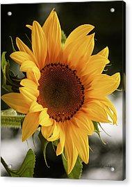 Acrylic Print featuring the photograph Sunny Sunflower by Jordan Blackstone