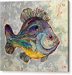 Sunnyfish Acrylic Print