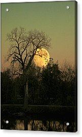Acrylic Print featuring the photograph November Supermoon  by Chris Berry