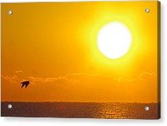 Sunrise And Bird Acrylic Print