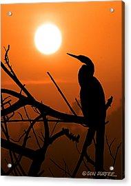 Sunrise Anhinga Acrylic Print by Don Durfee