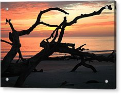 Sunrise At Driftwood Beach 3.1 Acrylic Print