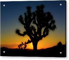 Sunrise At Joshua Acrylic Print
