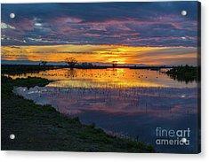 Sunrise At The Merced National Wildlife Refuge Acrylic Print