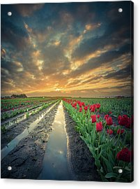 Acrylic Print featuring the photograph Sunrise At Tulip Filed After A Storm by William Lee
