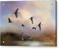 Sunrise Flight Acrylic Print