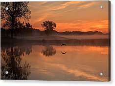Acrylic Print featuring the photograph Sunrise Goose by Fiskr Larsen