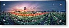 Acrylic Print featuring the photograph Sunrise, Hot Air Balloon And Moon Over The Tulip Field by William Lee