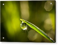 Acrylic Print featuring the photograph Sunrise In A Dewdrop by Monte Stevens