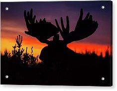 Sunrise King Acrylic Print