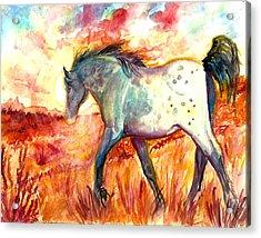 Sunrise Mare Acrylic Print by Jenn Cunningham
