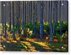 Sunrise On Tree Trunks Acrylic Print