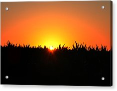 Sunrise Over Corn Field Acrylic Print by Bill Cannon